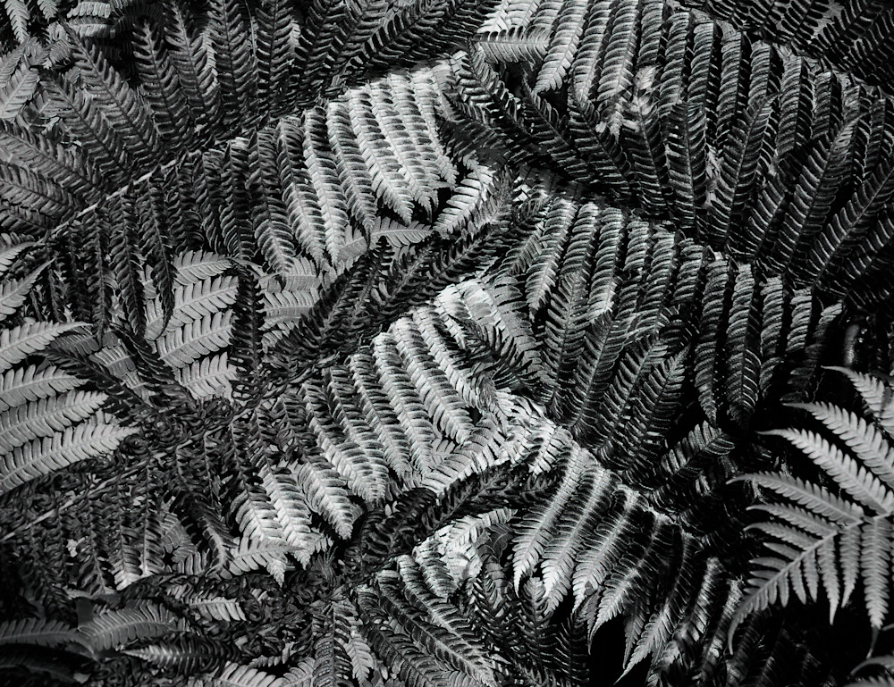 Patchwork Fern Photography Art | Ed Sancious - Stillness In Change