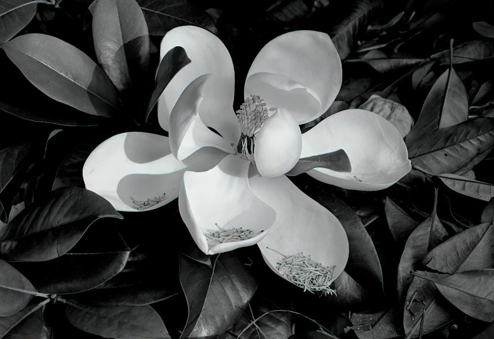Magnolia Photography Art | Ed Sancious - Stillness In Change