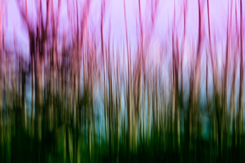 Albizia I  Photography Art | Sheryl's Virtual Garden