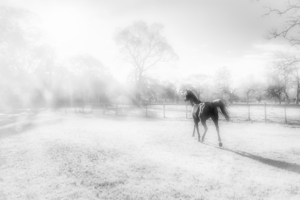 Field Of Hope Photography Art | Grace Fine Art Photography by Beth Sheridan
