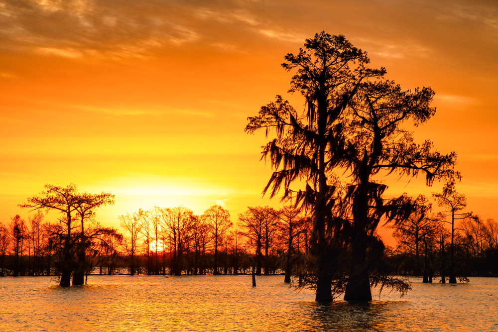 Louisiana Gold - Swamp sunrise photography prints