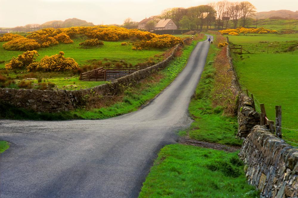 Rush Hour on Islay