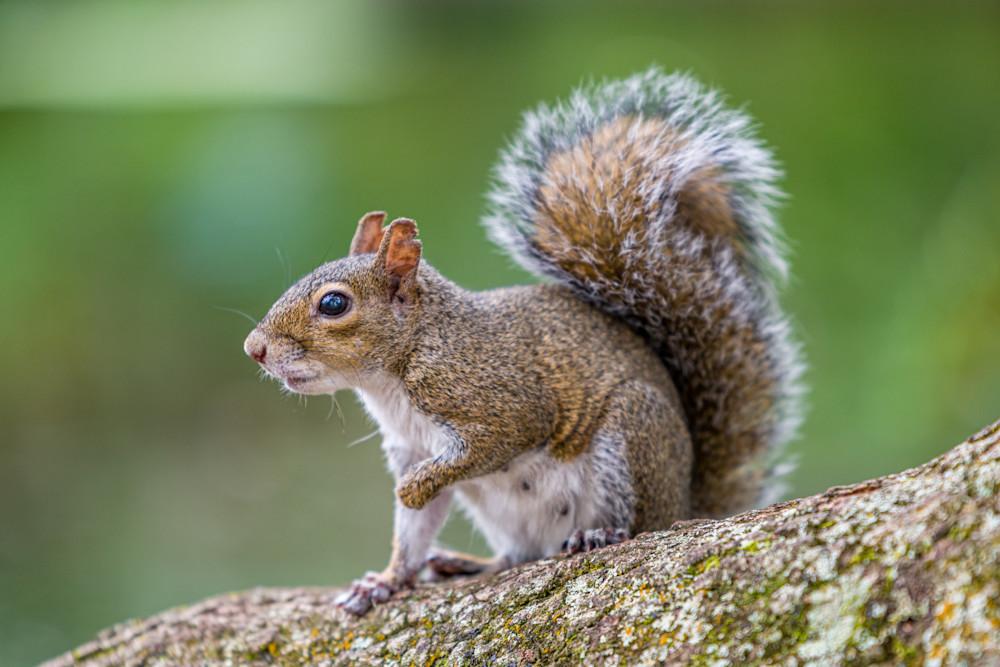 Squirrel Surprise Photography Art | kramkranphoto