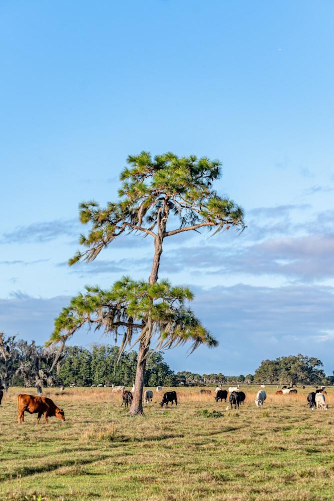 Old Cattle Land Photography Art | kramkranphoto