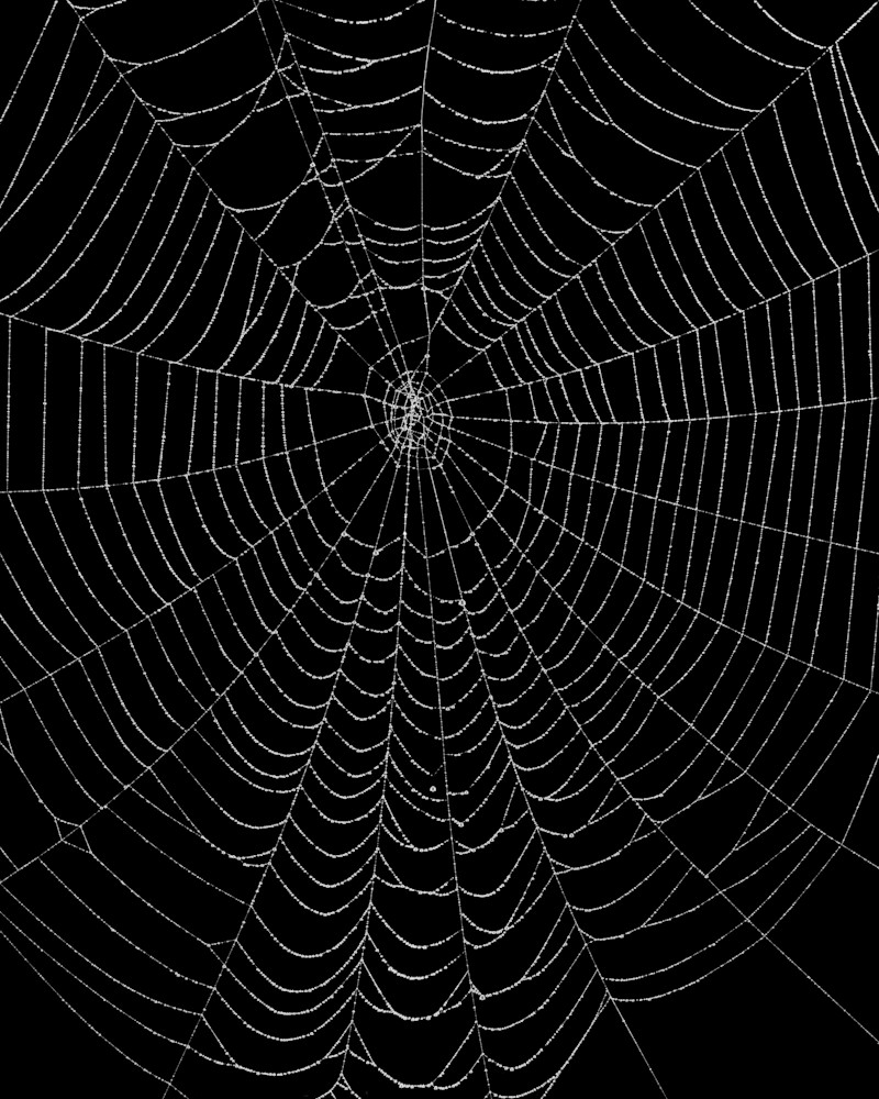 Spider Web 1972 Photography Art | Rick Gardner Photography