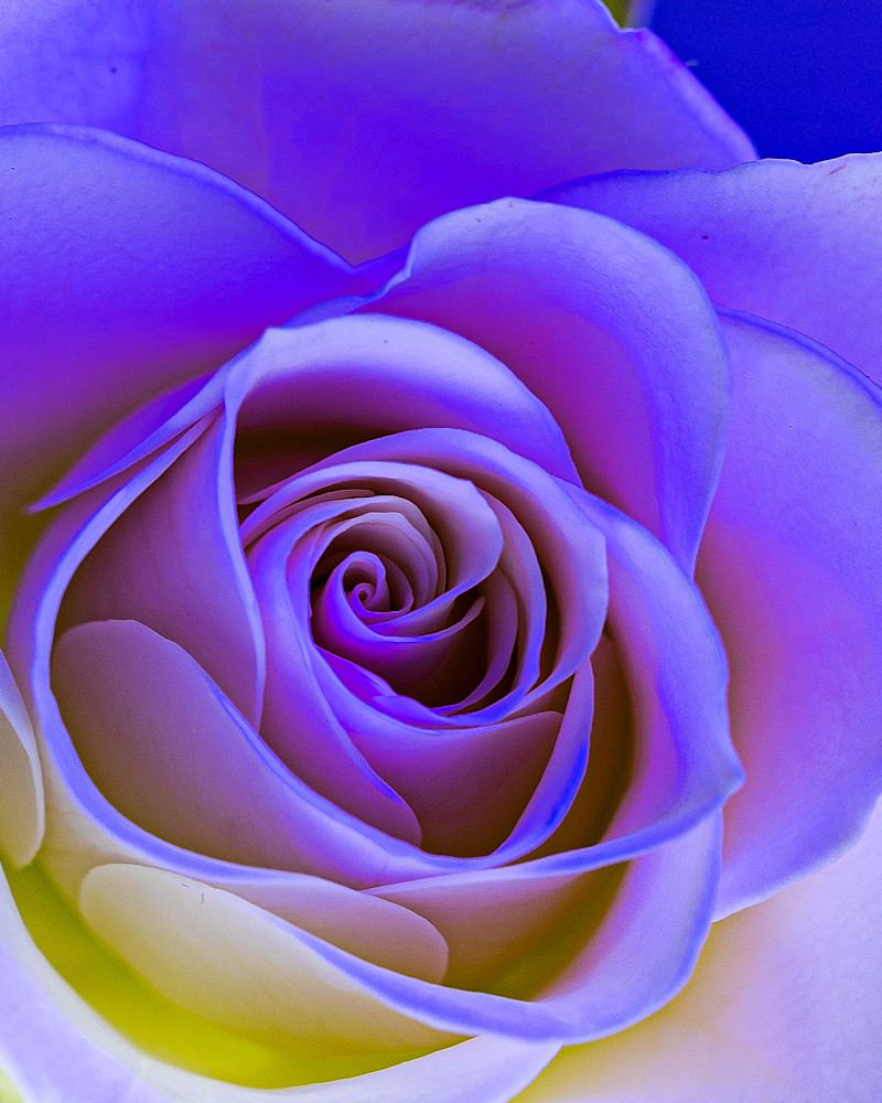 Rose Art   Thriving Creatively Productions