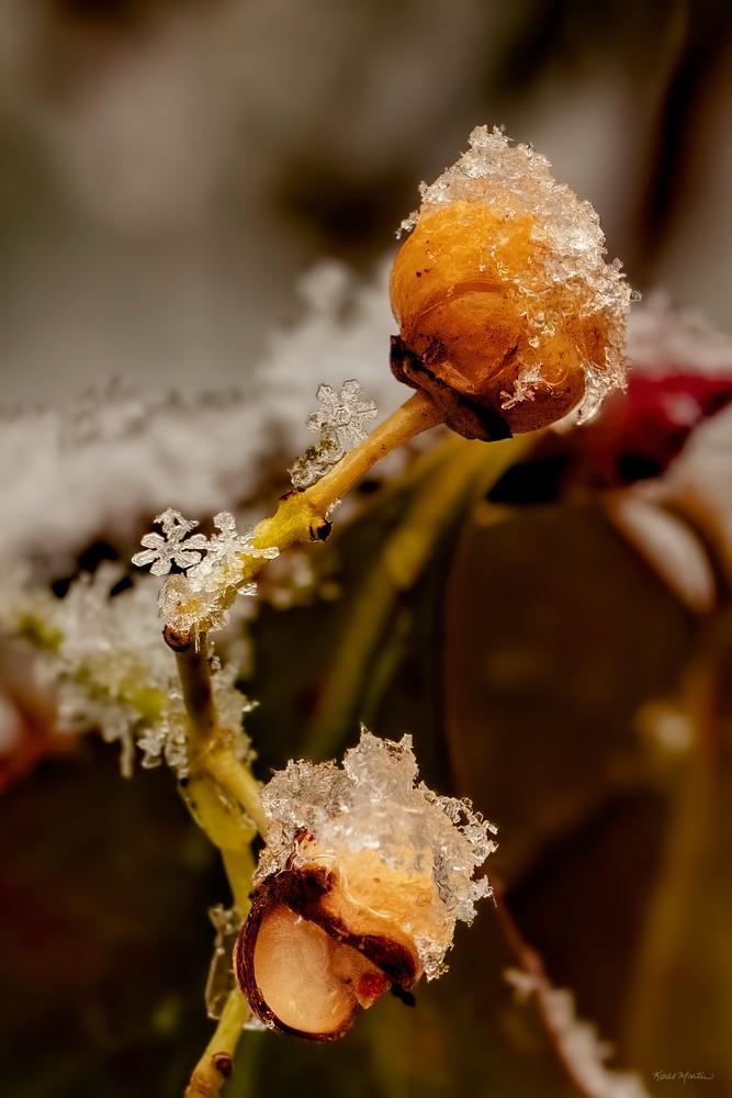 Unique Snowflakes  9007 Art | Koral Martin Fine Art Photography
