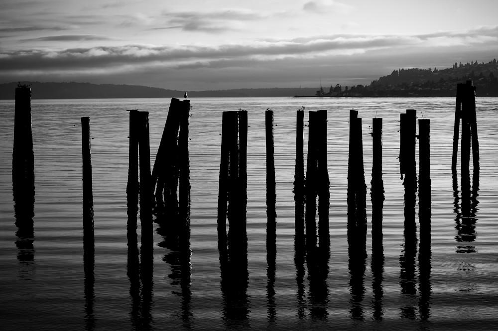 Old Pilings on Puget Sound, Tacoma, Washington, 2013