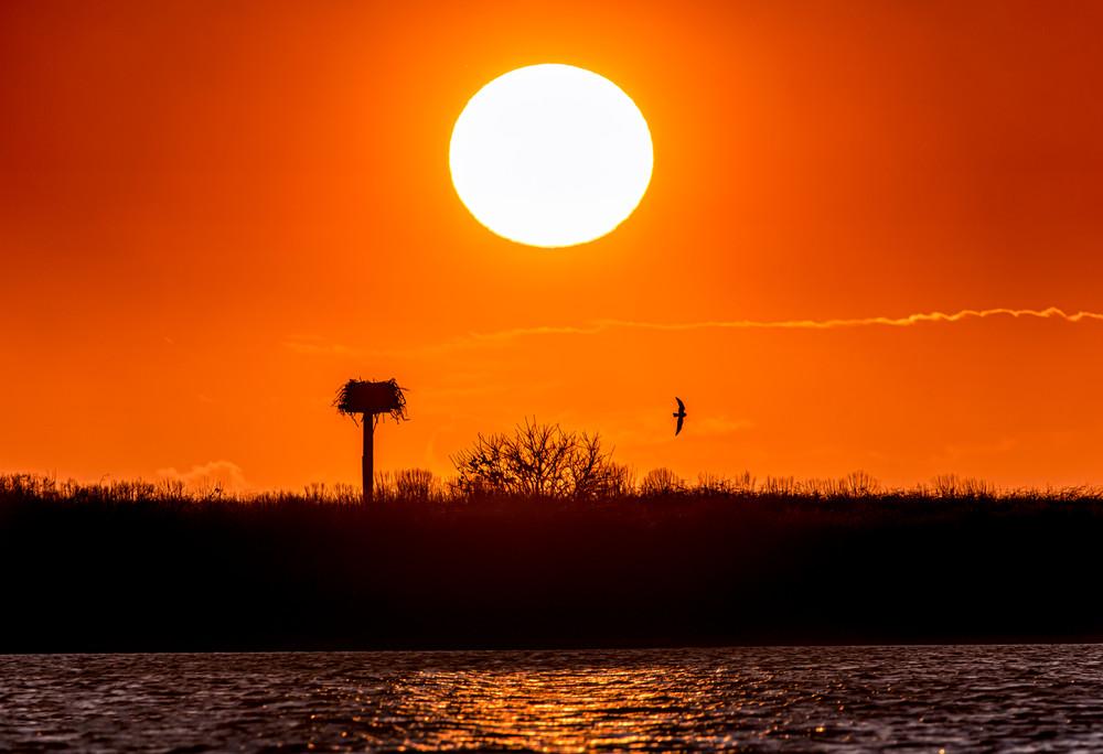 Chappy Cape Poge Osprey Setting Sun Art | Michael Blanchard Inspirational Photography - Crossroads Gallery