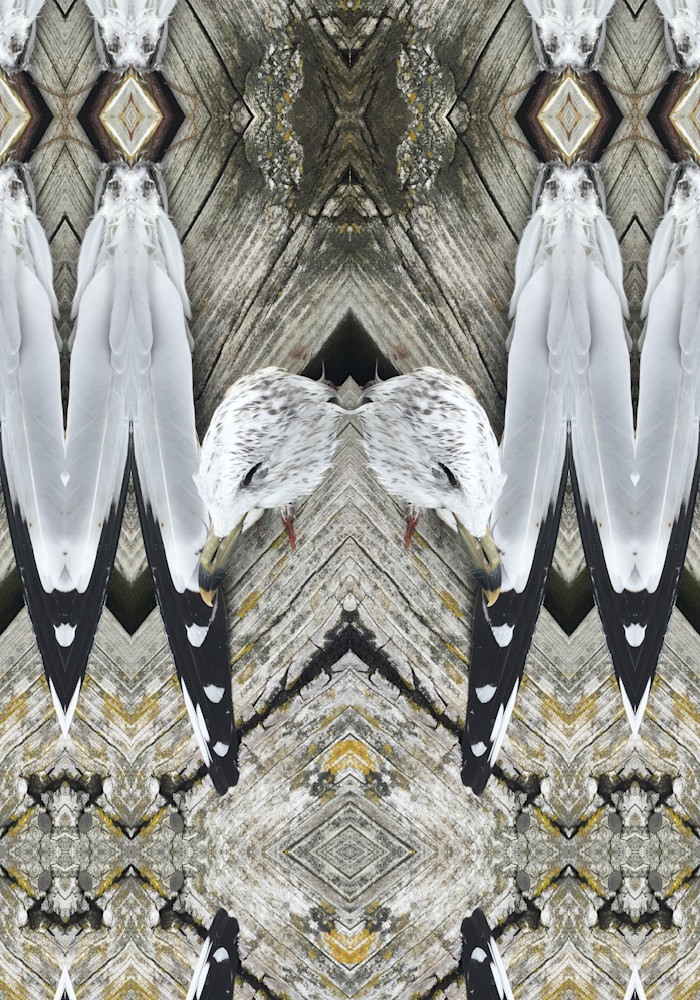 Marsha Carrington animal photo-fusion