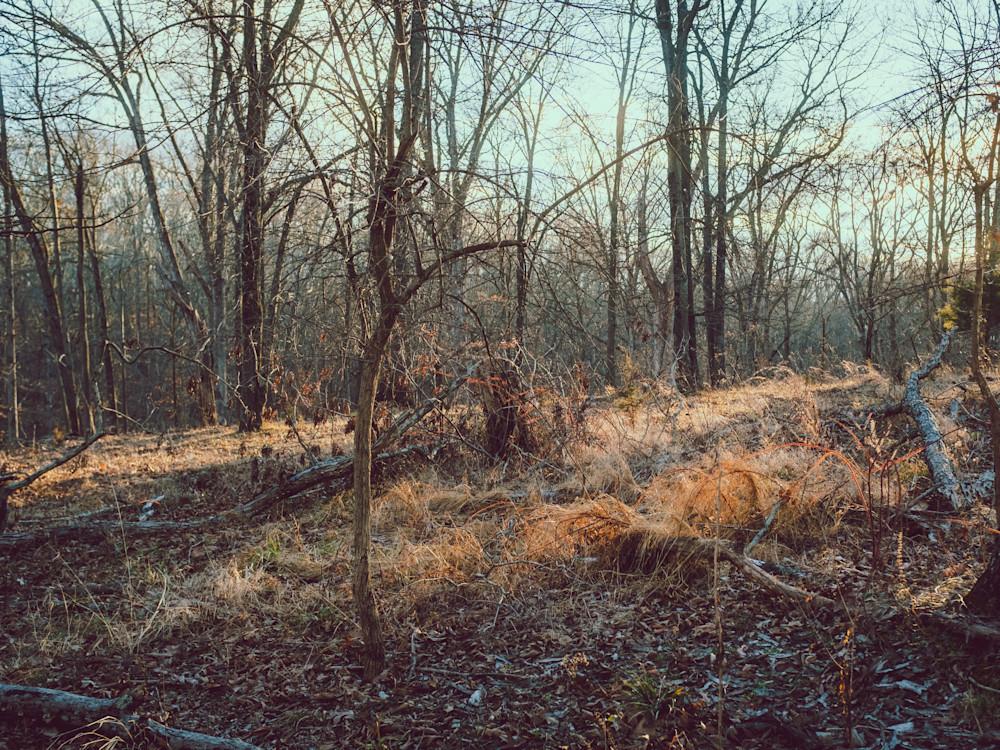 Nature Color 8150 Photography Art | Dan Chung Fine Art