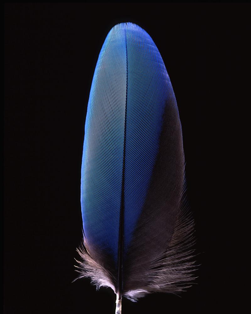 Blue Feather 2003 Photography Art | Rick Gardner Photography