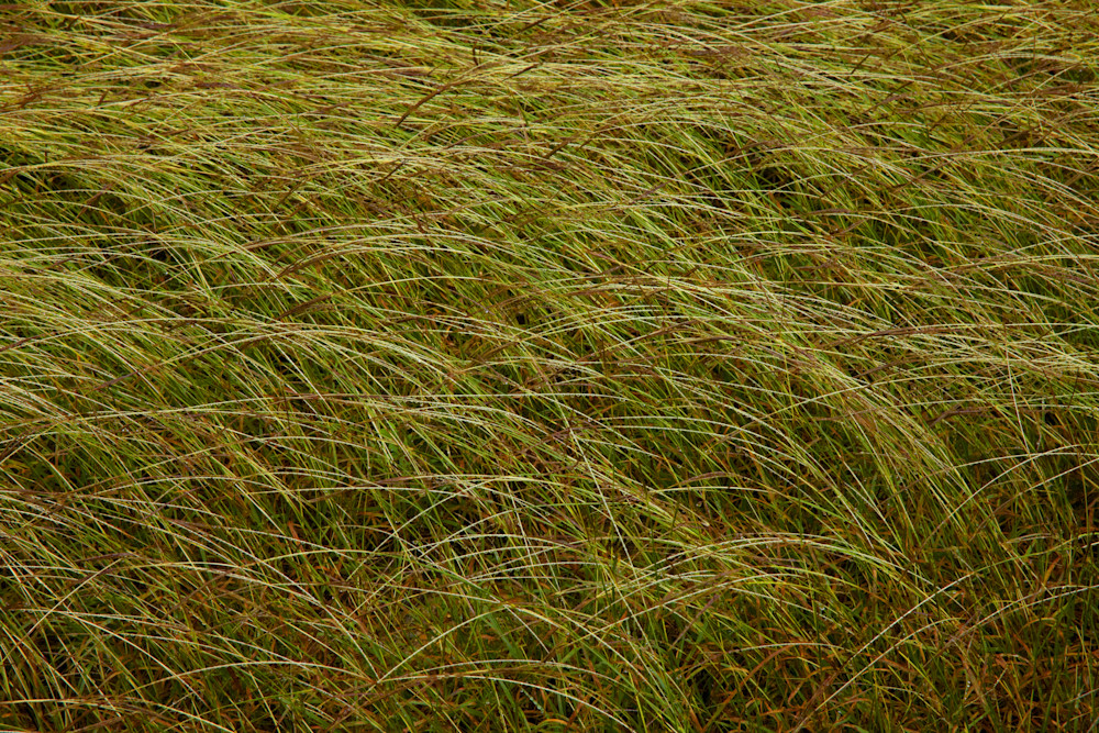 Grass Near The Guadalupe River, Texas Photography Art   Rick Gardner Photography