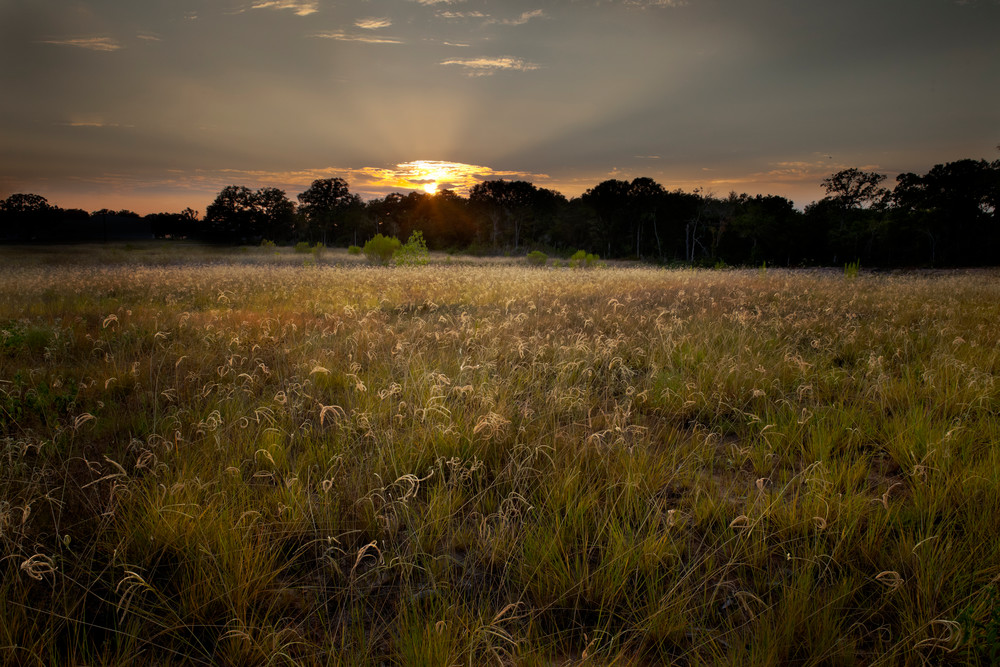 Setting Sun. Windmill Grass Photography Art | Rick Gardner Photography