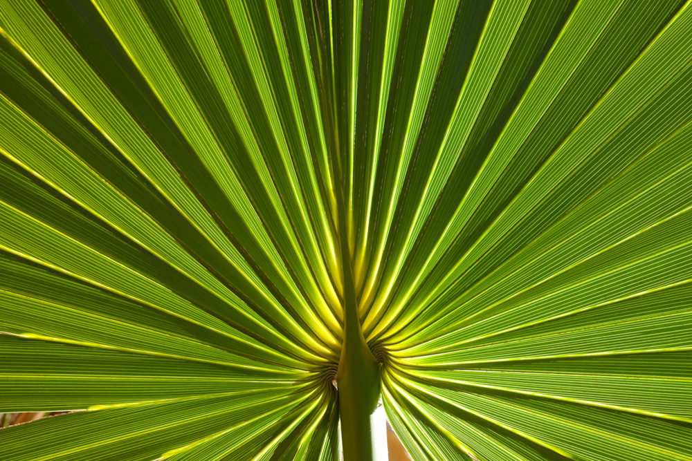 Palmetto Photography Art | Rick Gardner Photography
