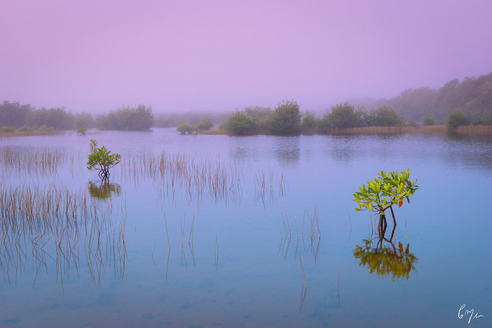 Constance Mier Photography - fine art prints of south Florida's Everglades