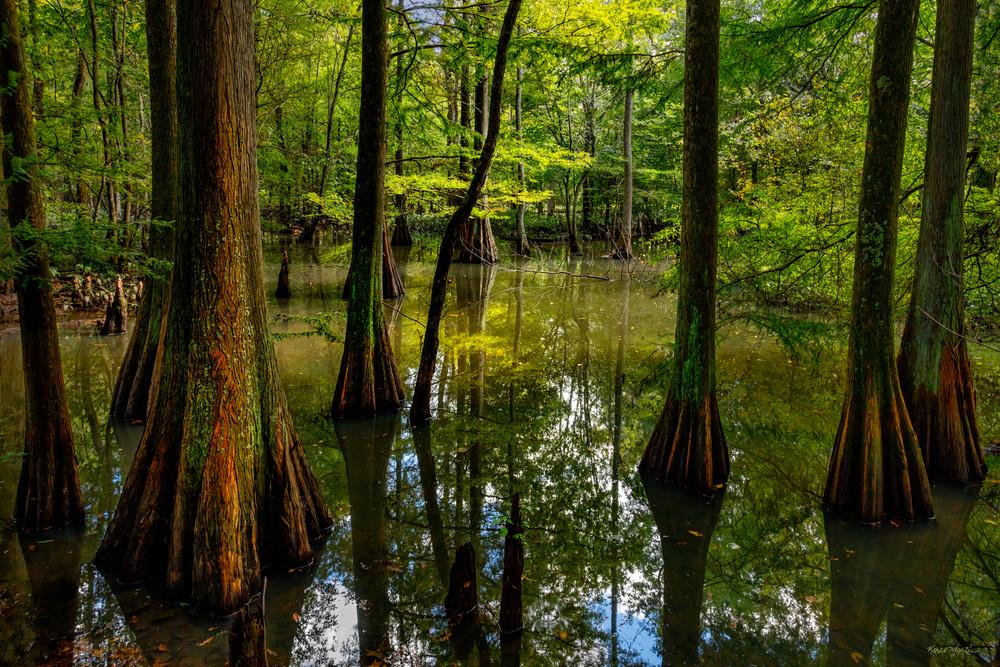 Cypress Tree In Detail 0981 Reelfoot Lake Art | Koral Martin Fine Art Photography