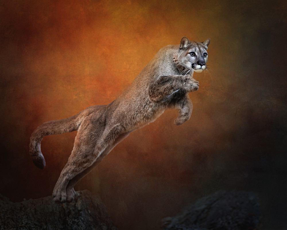Leaping Mountain Lion