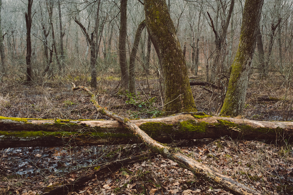 Nature Color 8327 Photography Art | Dan Chung Fine Art