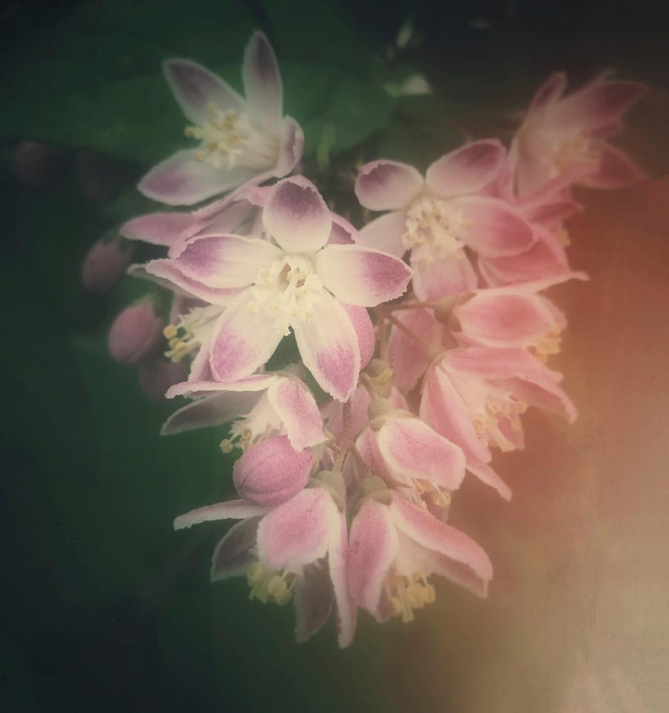 Blushing-radiance, flowering-heart, flowers, lost-valentine