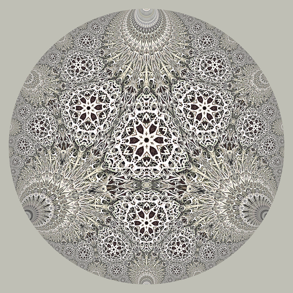 Hyperbolic Lichen 1b