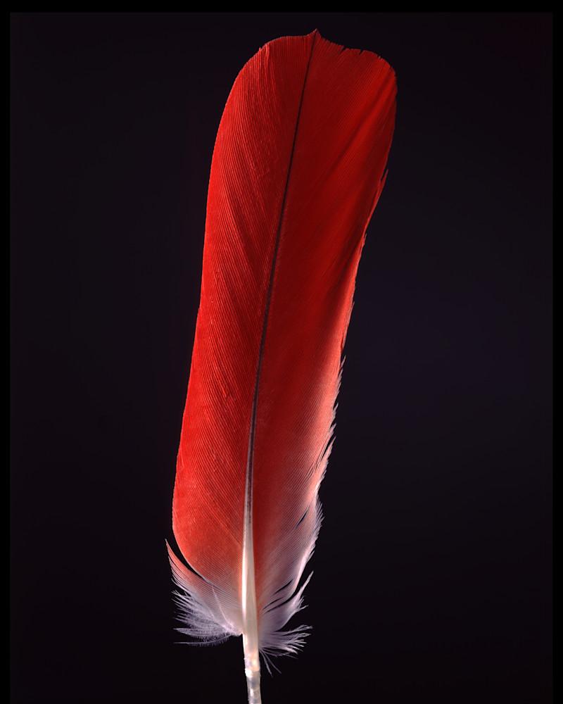 Tumba's Feather Photography Art | Rick Gardner Photography