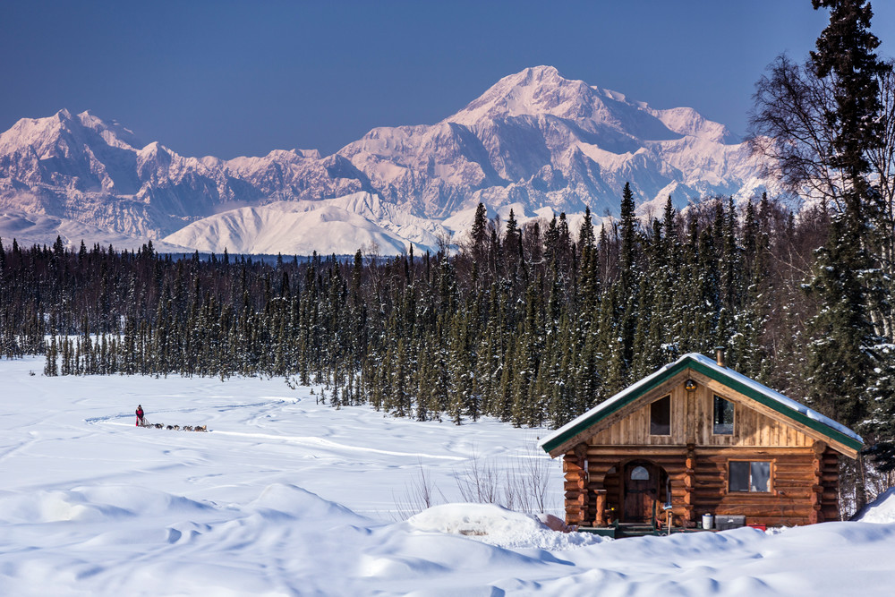 Dog musher Martin Buser runs his team during a spring training run on a lake with Mt. Mckinley and Alaska Range in the background and log cabin in foreground.   Southcentral, Alaska  PHOTO (C) BY JEFF SCHULTZ / ALL RIGHTS RESERVED