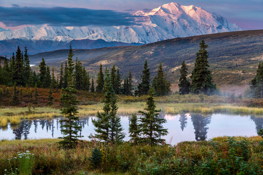 Summer/early fall-autumn landscape of Denali (Mt. Mckinley) has the first light (alpenglow) on it with a tundra pond in the foreground in Denali National Park at Camp Denali.  Interior, Alaska