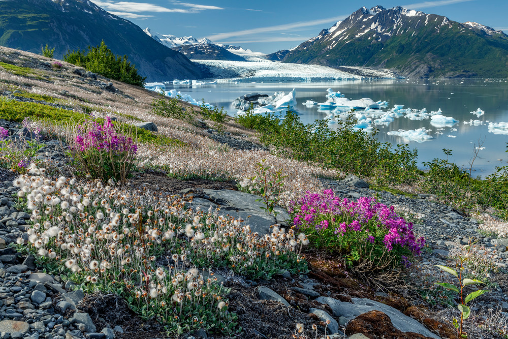 Summer Landscape of ice bergs floating in Inner Lake George and wildflowers on shore with Colony Glacier in Background.  Photo by Jeff Schultz/SchultzPhoto.com  (C) 2018  ALL RIGHTS RESERVED