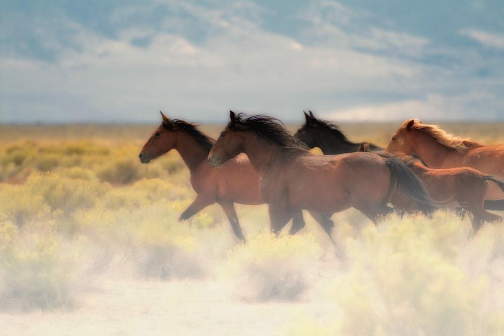 Running Wild Horses in Nevada Desert Print