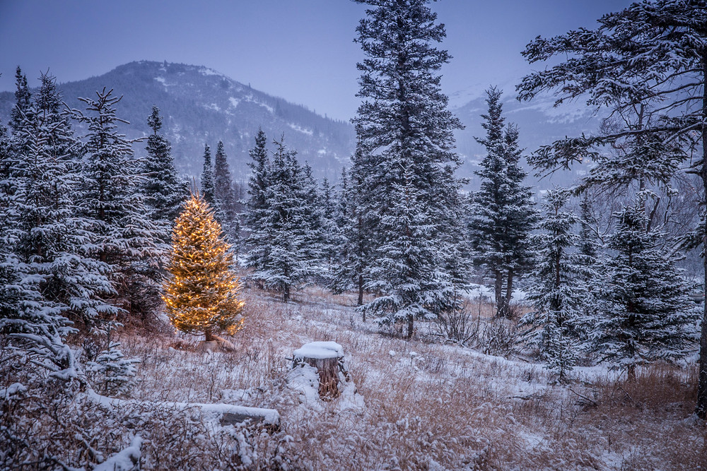Lighted Christmas tree in forest of snow covered trees  winter Alaska
