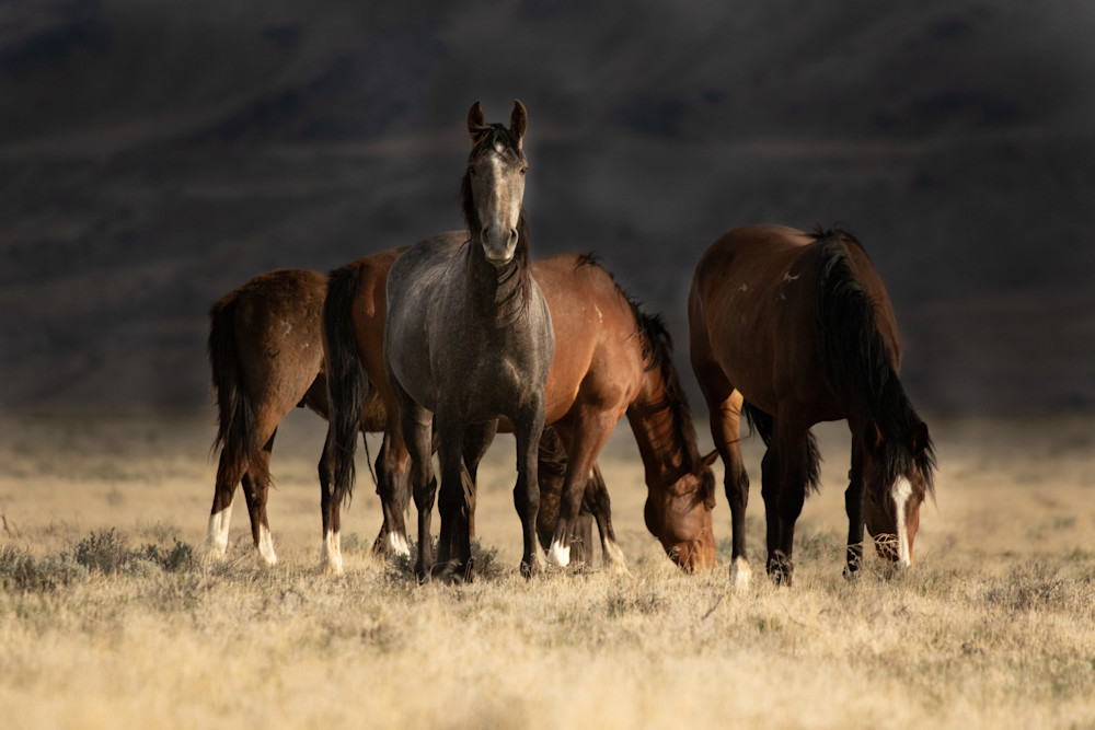 Lead gray mare and young ones grazing print