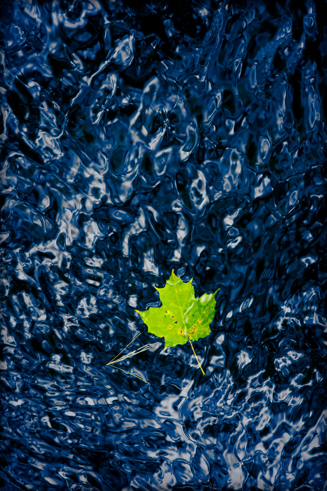Green Leaf in Blue Water