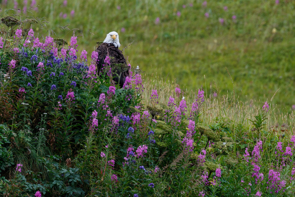 Flower Eagle