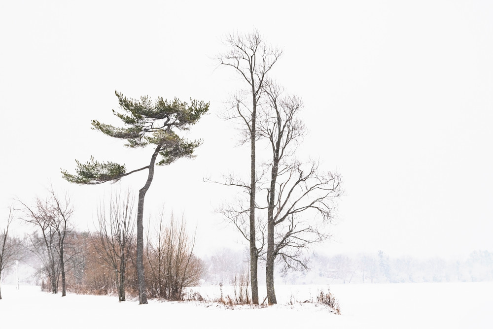 Winter Without Sun Photography Art | Elizabeth Stanton Photography