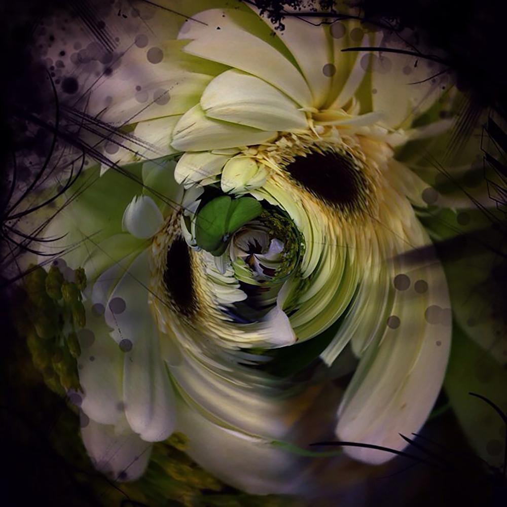 Circular Daisy Photography Art | Kathleen Messmer Photography
