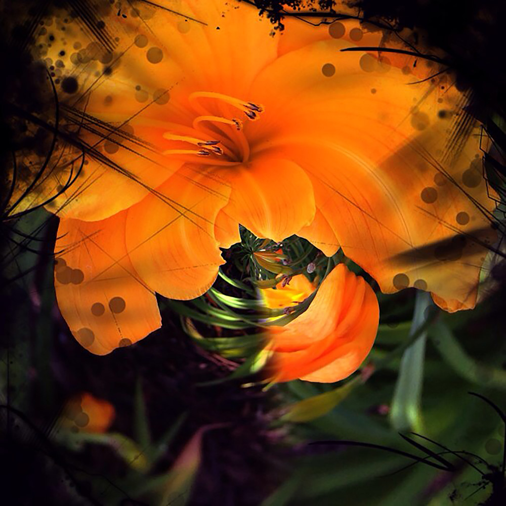 Circular Tiger Lily Photography Art | Kathleen Messmer Photography