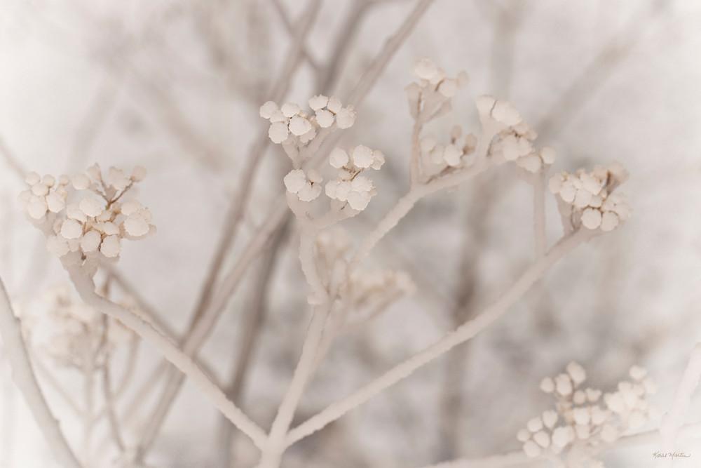 Misty Ice    Ice On Seed Pods 1083 Art | Koral Martin Fine Art Photography