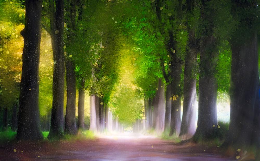 Forest Of Enlightenment Art   Karen Hutton Fine Art