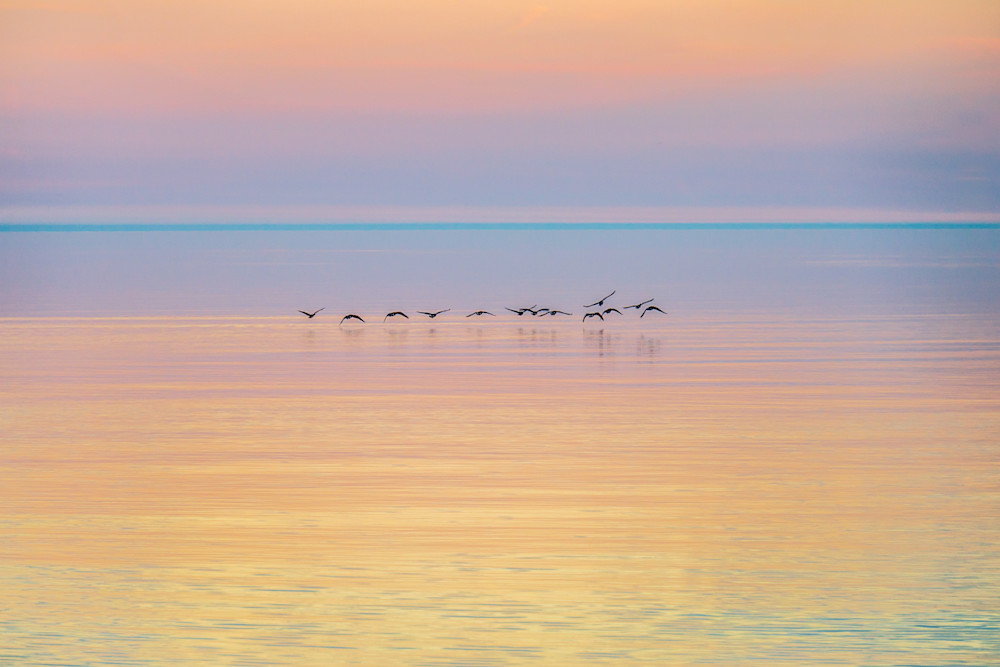 Canada Geese At Dawn Photography Art | Ted Glasoe, Artist