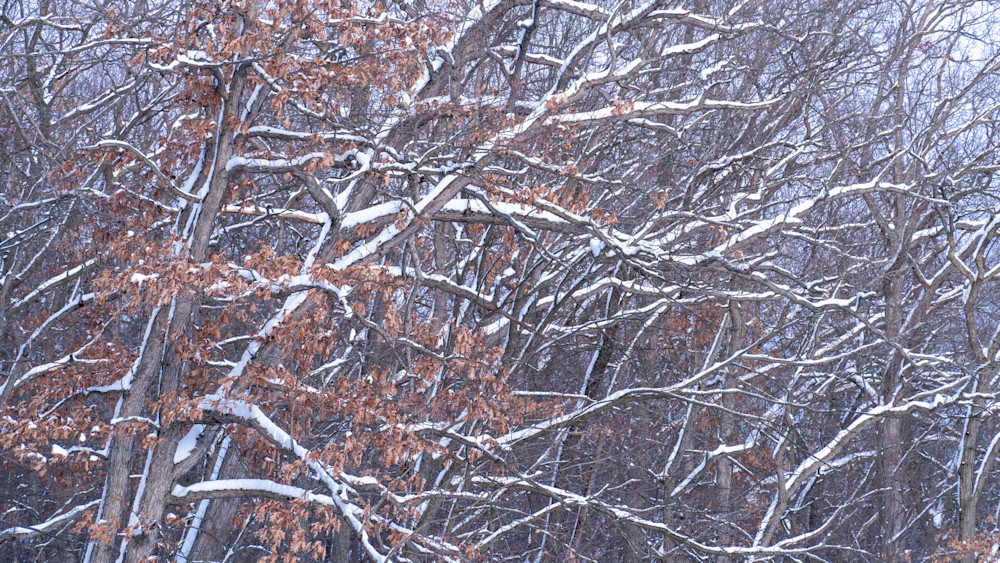 Haven Hill Winter Forest