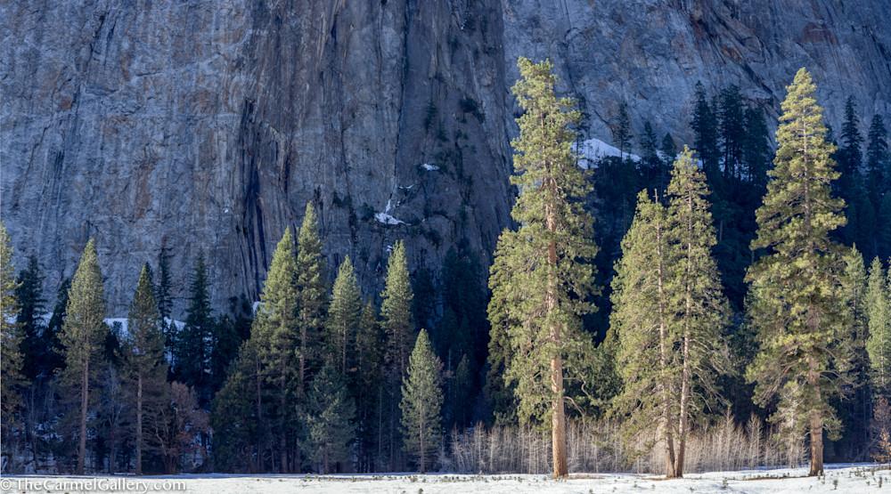 Winter Sun, Yosemite Art   The Carmel Gallery