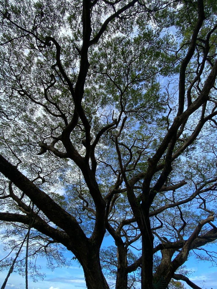 Nature's Beauty  Photography Art | Visionary Adventures, LLC