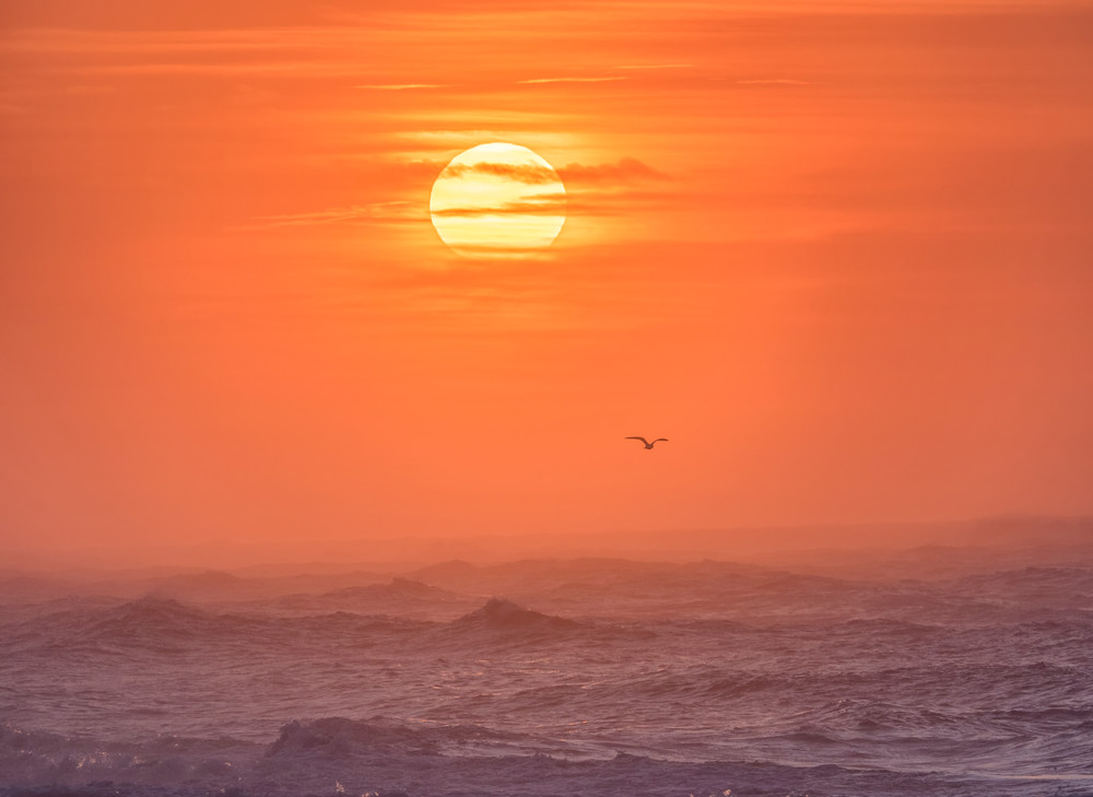 South Beach Winter Solo Gull Art | Michael Blanchard Inspirational Photography - Crossroads Gallery
