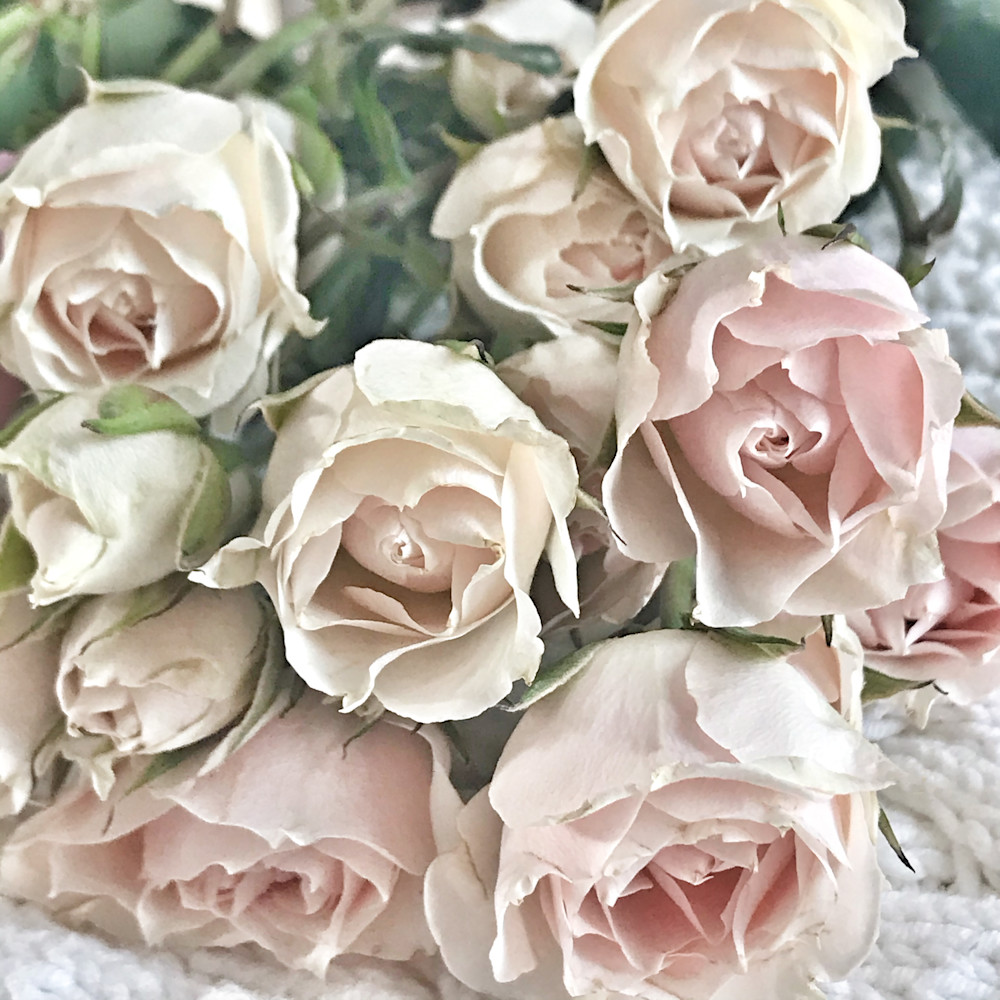 Pink, mini-roses, roses, bouquet, garden-tiles