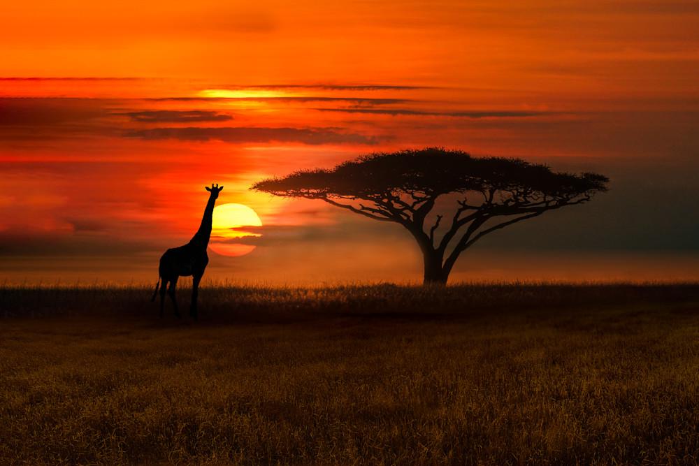 Harv Greenberg Photography - Serengeti