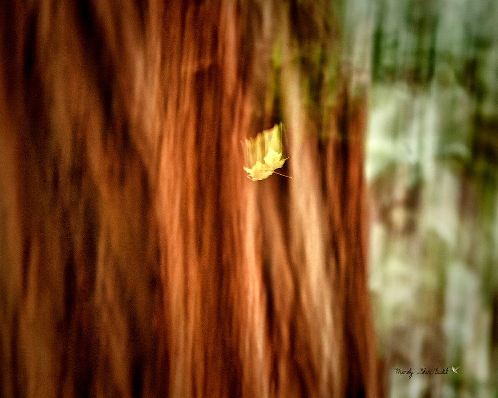 Falling Leaf Photography Art | Mindy Fine Art Photography