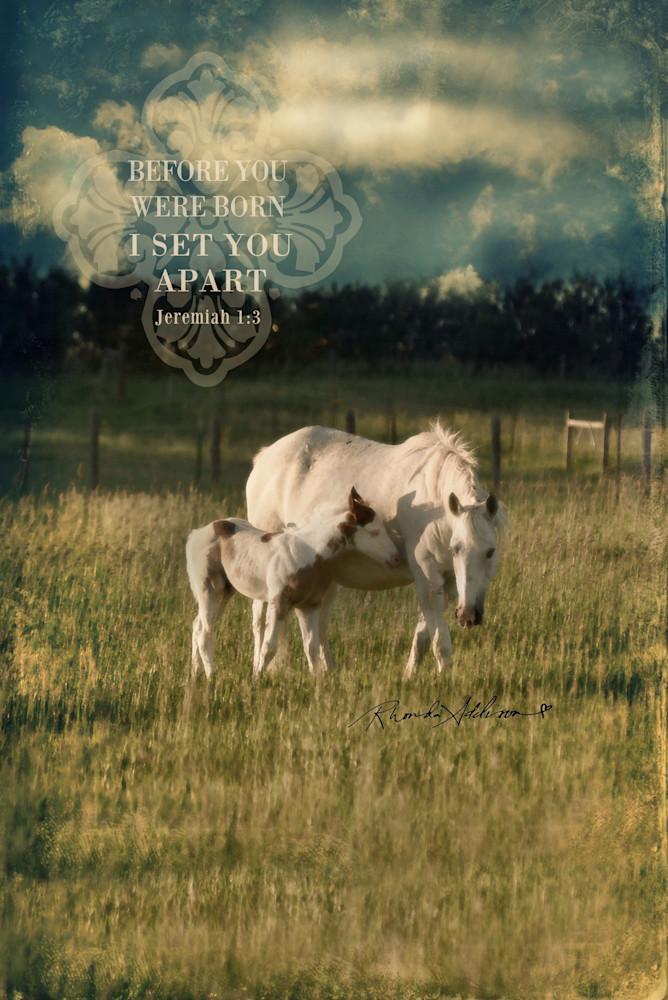 Horses I set you apart