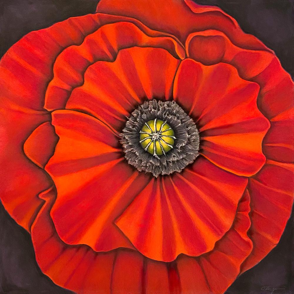 Poppy No. 1, Drawing,  2021 by artist Carolyn A. Beegan