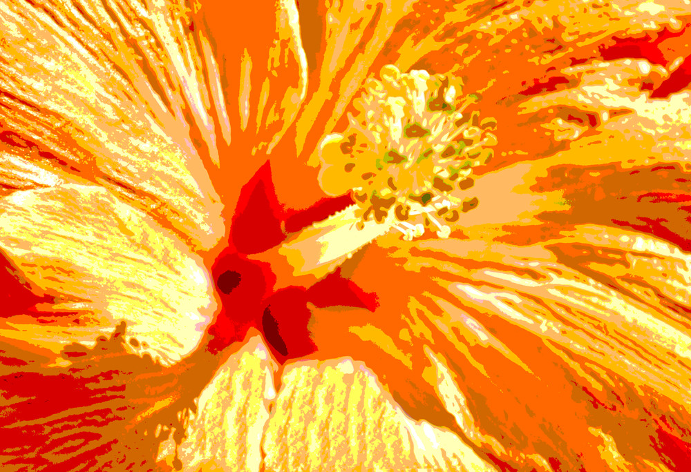 Sunshine Hibiscus